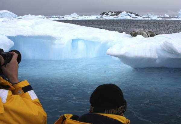 Icebear seal photographer