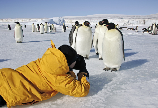 A photographer capturing penguins in Antarctica