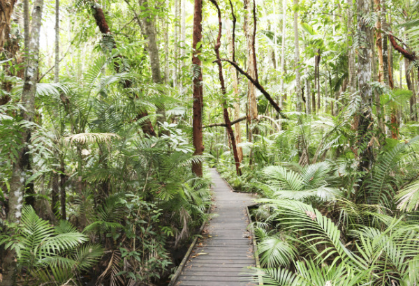 Cairns: What to Do and See While You're There