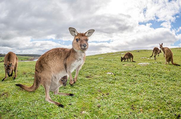safe online casino kangaroo land