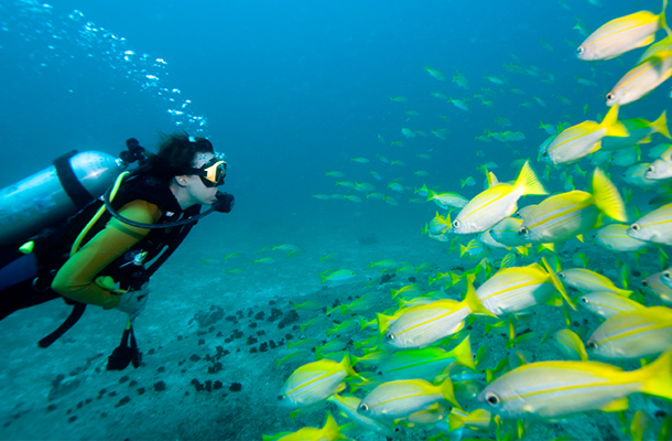 Scuba diver with a school of fish